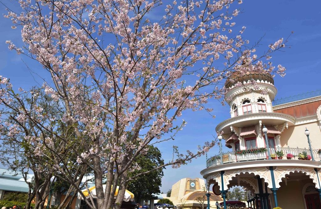 ソメイヨシノ(4 月上旬) (c)Disney