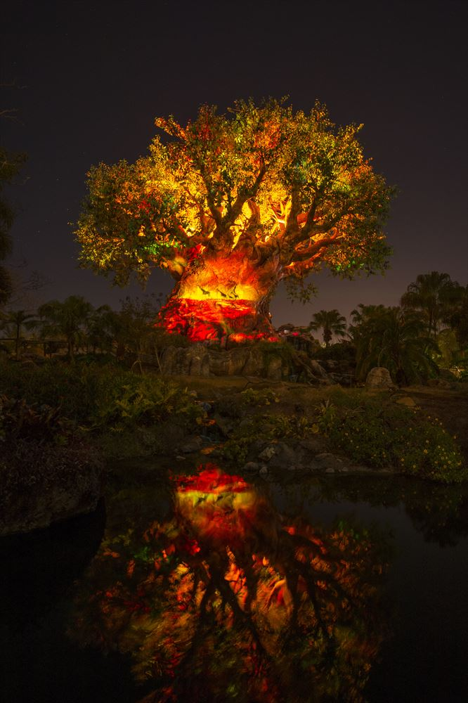Tree of Life Awakens at Disney's Animal Kingdom at Night (c)Disney