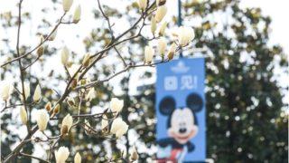 上海ディズニーリゾートでアトラクション優先入場「Disney Premier Access」販売開始/ピントレイベントを開催/春のシーズンパスポート情報(Update)